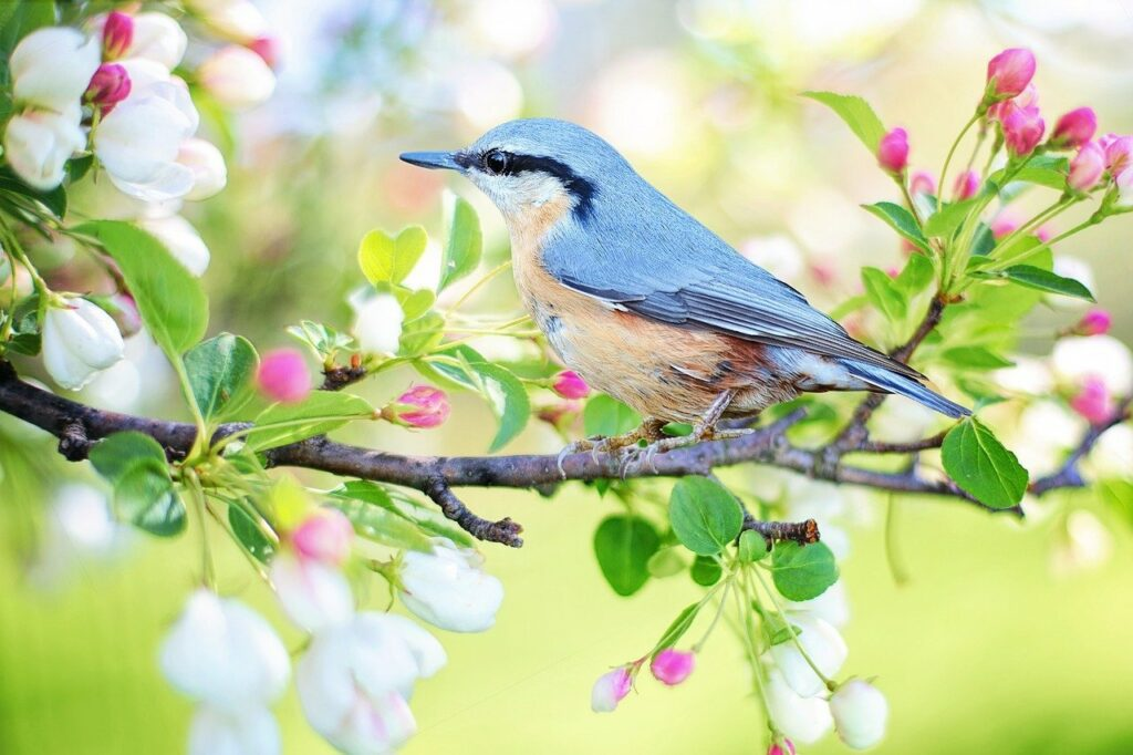 Photo of a bird in spring